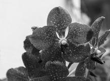 黑暗的紫色兰花 免版税图库摄影