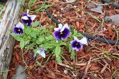 黑暗的紫色和白花 免版税库存照片