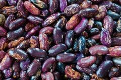 黑暗的紫色颜色豆与排序条纹的铺铁路, Selugia,爱达荷避难所 图库摄影