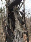 黑暗的结构树 秋季森林 库存照片