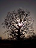黑暗的结构树 免版税图库摄影