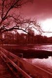黑暗的结构树 免版税库存图片