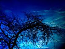 黑暗的结构树 库存照片