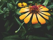 黑暗的花 图库摄影