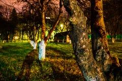 黑暗的苹果树在华美的夏天晚上 免版税库存照片