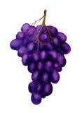 黑暗的葡萄 库存照片