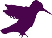 黑暗的蜂鸟紫色剪影 免版税库存图片