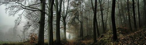 黑暗的蠕动的有雾的森林 库存图片