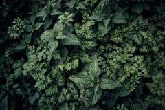 黑暗的野生绿色杂草 库存照片