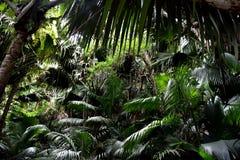 黑暗的雨林在塞舌尔群岛 免版税库存照片