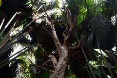 黑暗的雨林在塞舌尔群岛 库存图片