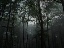 黑暗的雾结构树 库存图片