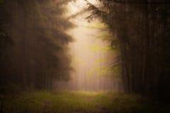 黑暗的雾 库存照片