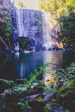 黑暗的飘渺不可思议的森林- Wairoa/Te Wairere瀑布 库存照片