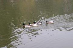 黑暗的鸟自然秀丽甘托克锡金北部东部七姐妹印度 免版税库存照片
