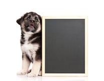 黑板小狗 免版税库存图片