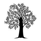 黑树,被隔绝的自然传染媒介的例证与叶子的 库存图片