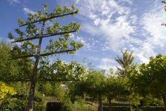 黑梅尔市Sauerlandpark在德国 图库摄影