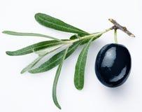 黑橄榄 免版税库存照片
