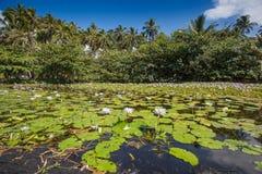 黑沙滩夏威夷美好的风景背景  库存图片