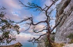 黑海海湾看法与岩石、干死的断枝树和树b的 库存照片