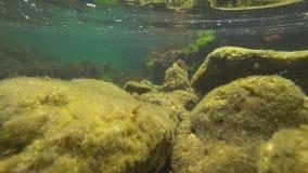 黑海的水下的世界有鱼的 股票视频