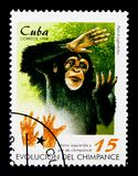 黑猩猩平底锅穴居人、手和脚,黑猩猩serie的演变,大约1998年 免版税库存照片