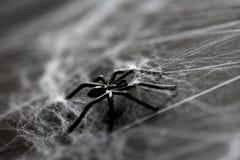 黑玩具蜘蛛的万圣夜装饰在蜘蛛网的 免版税图库摄影