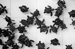 黑白乌龟样式 图库摄影