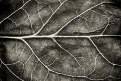 黑白作为自然纹理背景的叶子坚固性表面结构极端宏观特写镜头照片 库存图片