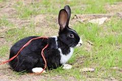 黑白兔子的兔宝宝 库存图片