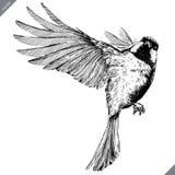 黑白刻记被隔绝的山雀传染媒介例证 向量例证