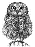 黑白刻记被隔绝的猫头鹰例证 免版税图库摄影