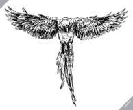 黑白刻记被隔绝的鹦鹉传染媒介例证 免版税库存图片