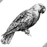 黑白刻记被隔绝的鹦鹉传染媒介例证 库存图片