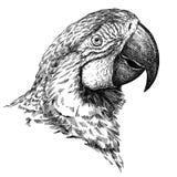 黑白刻记被隔绝的鹦鹉例证 库存图片