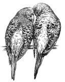 黑白刻记被隔绝的鹦鹉例证 免版税库存图片