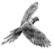 黑白刻记被隔绝的鹦鹉例证 免版税库存照片
