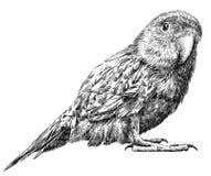 黑白刻记被隔绝的鹦鹉例证 库存照片
