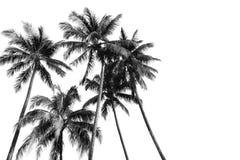 黑白剪影热带可可椰子树 库存图片