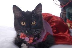 黑白圣诞节小猫 免版税库存照片