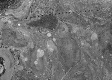 黑白大理石背景 免版税库存图片