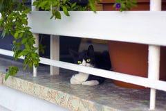 黑白小猫在被操刀的大阳台房子坐 图库摄影