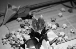 黑白幸运星和其他origami形象 图库摄影