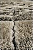 黑白抽象冻湖 免版税库存图片