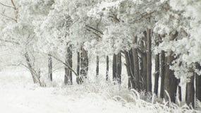 黑白木头 免版税库存照片