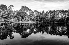 黑白森林和脚跨接仍然反射在透明的水 免版税库存照片