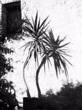 黑白植物 库存图片