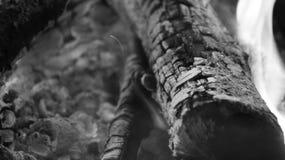 黑白灼烧的火木头和炭烬 免版税库存照片