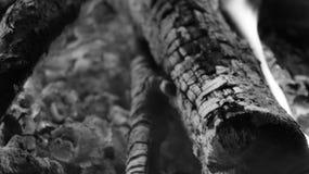 黑白灼烧的火木头和炭烬 库存照片